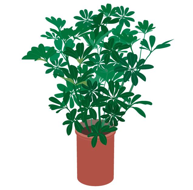 観葉植物ホンコンのベクターデータ・AI形式